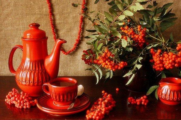 Калиновый чай, полезные свойства калины