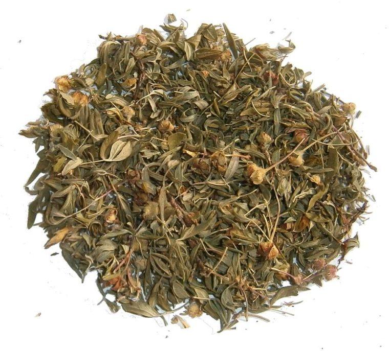 Курильский чай: лечебные свойства