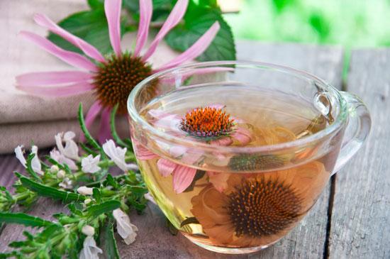 Целебный чай с эхинацеей